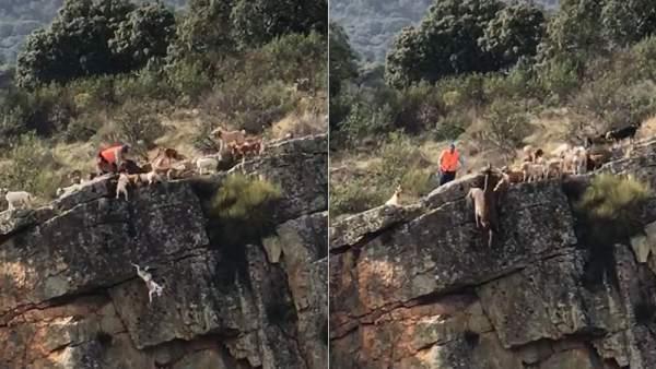 Un ciervo y 12 perros caen despeñados por un barranco