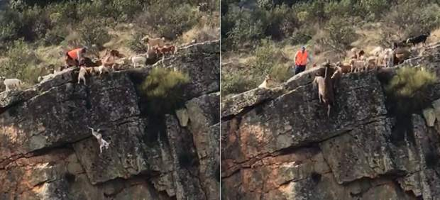 Animales despeñados por un barranco