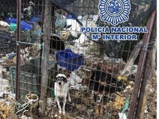 Diez detenidos por maltratar a dieciocho perros, de los que dos han muerto