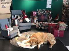 Perros, en Ikea