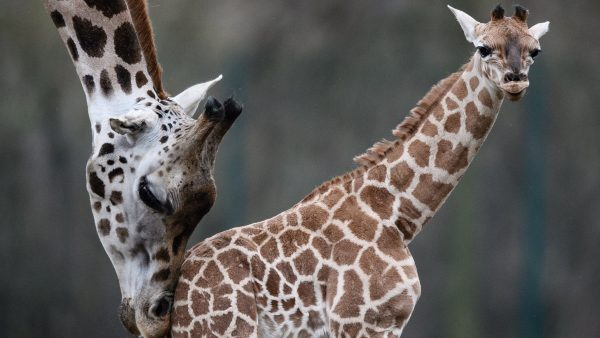 'Baby Ella', la nueva estrella del zoo de Berlín