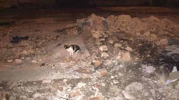 Gato callejero (Archivo)