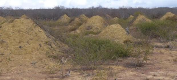 La mayor agrupación de termiteros del mundo se encuentra en Brasil y puede ser vista incluso desde ...