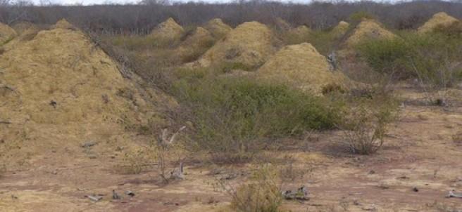 Termiteros en Brasil