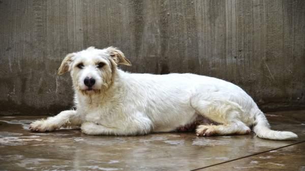 Més de 50 gossos buscaran ser adoptats en la desfilada d'AUPAiBioparc