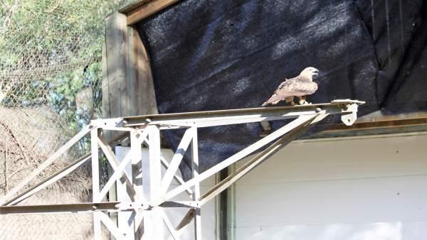 Nuevo dispositivo para evitar la electrocución de aves