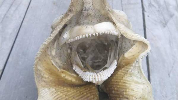 ¿Un monstruo marino?