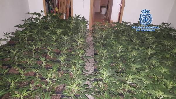 Interior de la vivienda usada para invernadero de marihuana