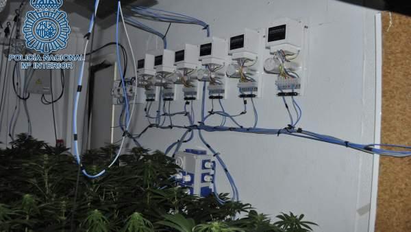 Desmantelado un punto de cultivo de marihuana en San Juan de Aznalfarache