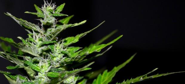 El productor de Marlboro invierte 1.800 millones en una empresa de cannabis