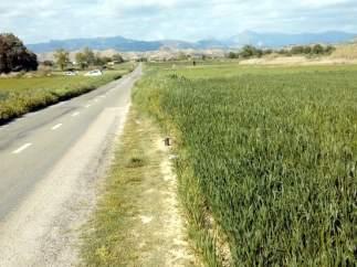 Carretera a Tierz y Bellestar