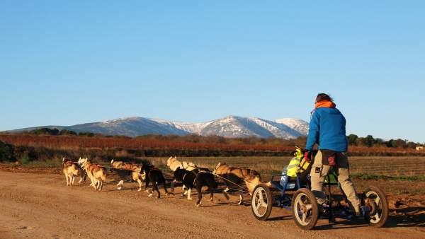 Travesía Con Perros De Tiro En El Moncayo, Mushing