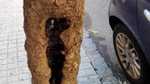 Árbol Dañado, Hueco