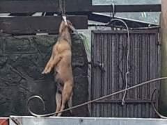 Detenida una mujer por maltrato animal en Fisterra (A Coruña).