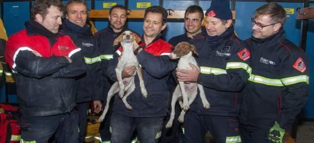 Bomberos rescatan a cuatro perros atrapados en una tubería en Mutxamel