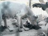 Un perro alimentándose de los restos de otro