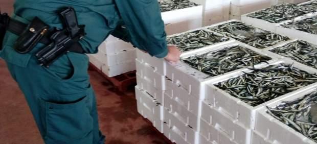 Sucesos.- Intervenidos más de 2.600 kilos de boquerón inmaduro en la lonja de Motril