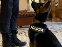 Stan Lee, el perro Policía