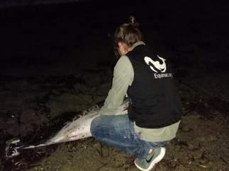 Delfín varado en la arena con la palabra Juan en un costado