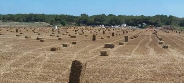 Abierta una línea de ayudas para fomentar la concentración de las cooperativas agrarias de ...