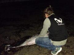 Delfín en Roquetas