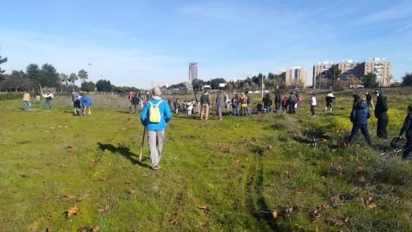Plantación para reforestar Tablada de la plataforma Sevilla Más Verde