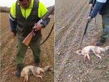Un cazador pisotea a un zorro