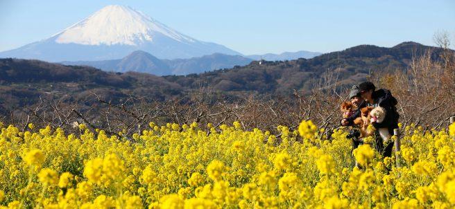 Amarillo floral