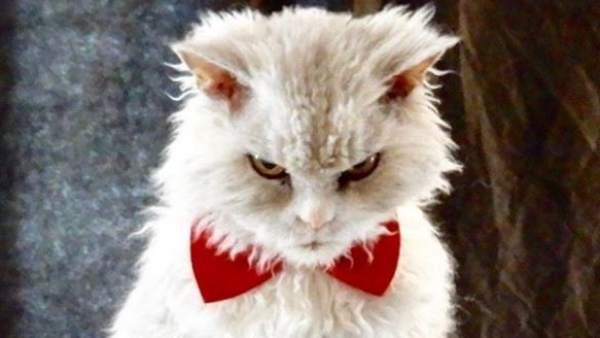 Pompous Albert, el gato más enfadado de Instagram