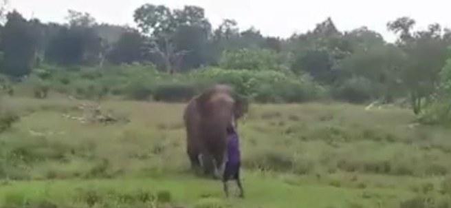Hombre pisoteado por elefante