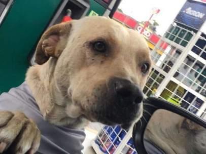 Randy, un perro callejero rescatado