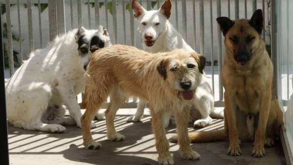 Una imagen de archivo de perros en Adopción