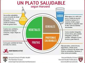 Plato Harvard