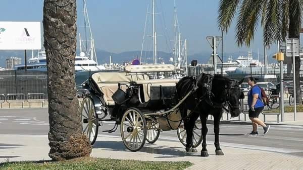 Galera en el puerto de Palma