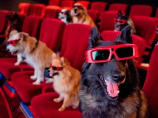 Cine 'dog friendly'