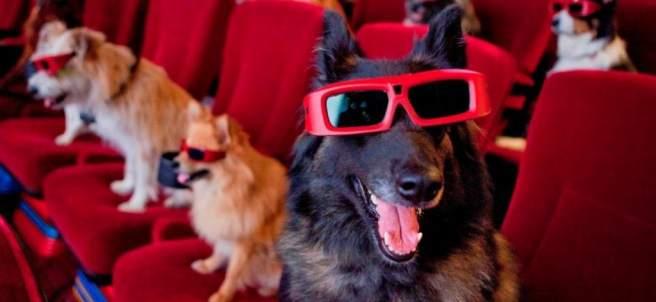Cine 'dog friendly'