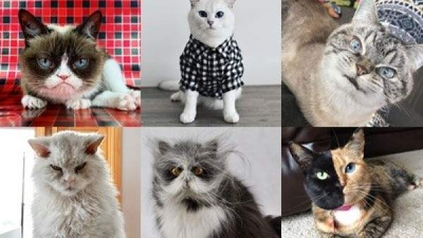 Gatos más populares de Instagram