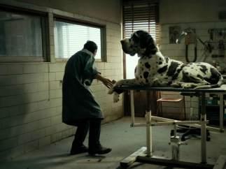 'Dogman' (2018)