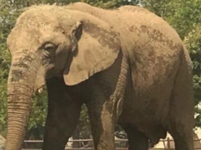 Elefanta Lammie