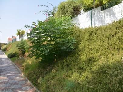 Talud en la calle Rafael Alberti de Tomares antes de la construcción de un jardí