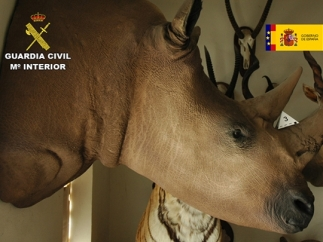 También había rinocerontes