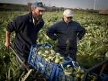Desde el AMB se impulsan programas de estrategia para impulsar la agricultura en el Baix Llobregat.
