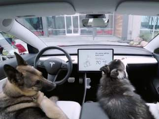 El 'Modo perro'
