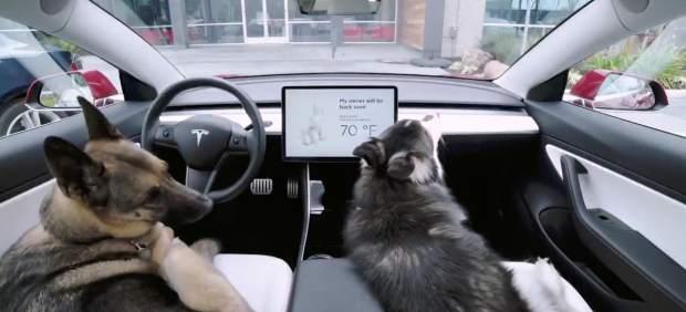 Los Tesla contarán con un 'modo perro' que permitirá dejar a las mascotas en el coche sin correr riesgos