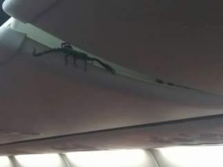 Un escorpión, pasajero inesperado de un vuelo