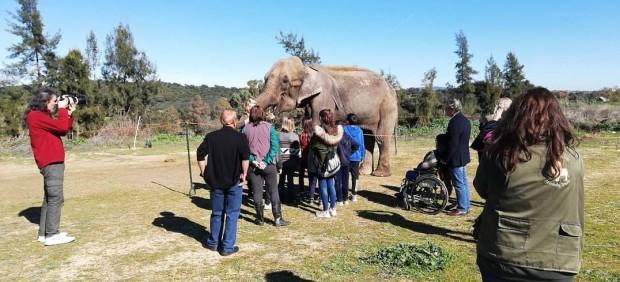 FAADA denuncia las condiciones en las que tienen a la elefanta Dumba: