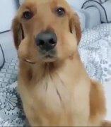 Un perro es pillado haciendo travesuras