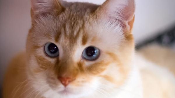 Imagen de archivo de un gato.
