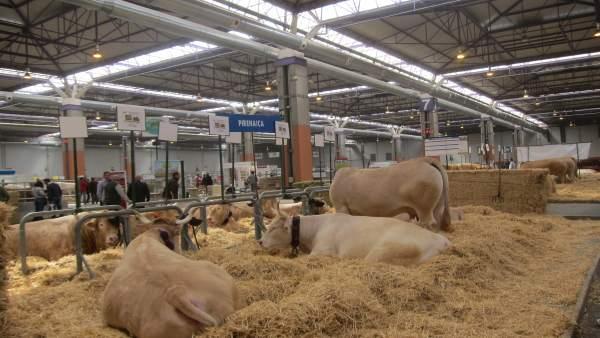 FIGAN entregará su Premio Excelencia a cinco ganaderías