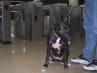 Un perro en el tren